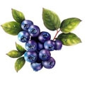 ELiquid 30ml Blueberry E-Liquid
