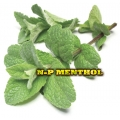 Vg ELiquid 30ml Npure  Menthol E-Liquid